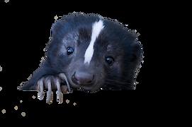 skunk.png