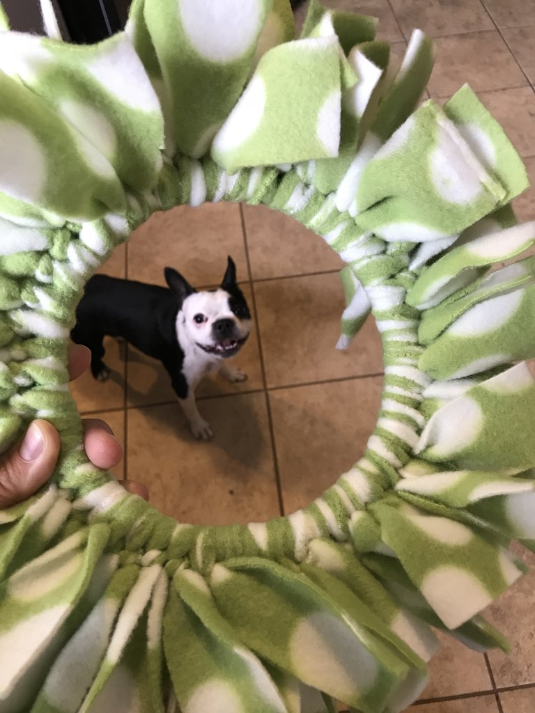 Dogbee Dog Frisbee Toy, Green_White2