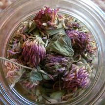 Dried red clover (Trifolium pratense)