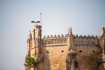 Stork on the Great Priory Church, El Puerto De Santa Maria.