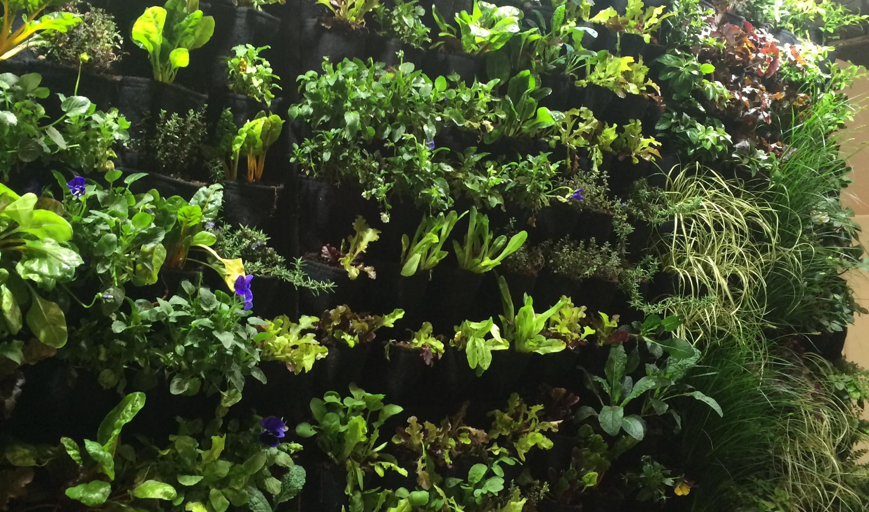 Salad Wall