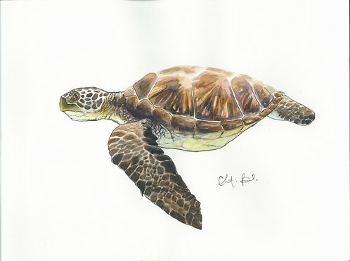 Honu in Watercolor and Ink