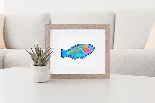 Parrotfish 1