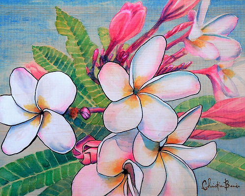 White and Pink Plumerias