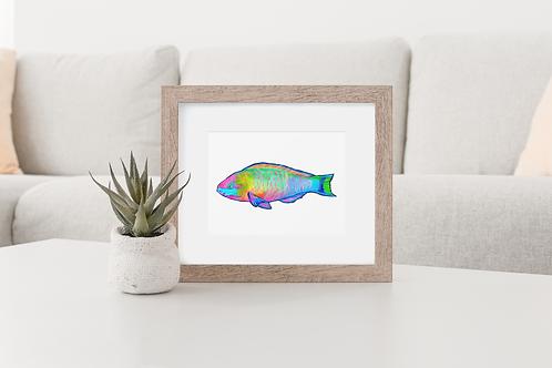 Parrotfish 2