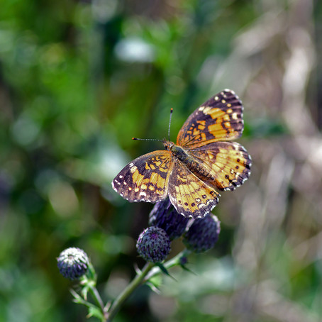 Five Fun Facts About Our Beloved Butterflies