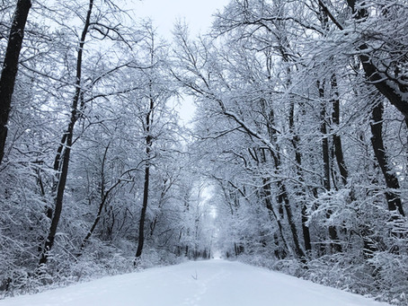 Plan A Winter Hike To Celebrate The Season