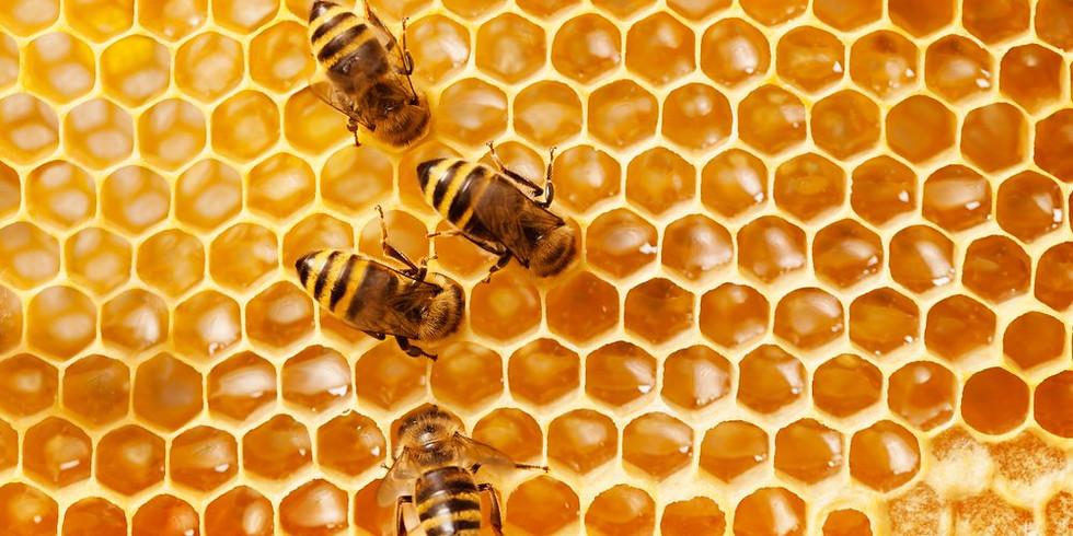 Pollinator Crafts: Wax & Honey