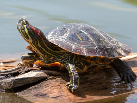 What's The Difference: Turtle Vs. Tortoise