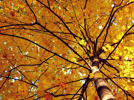 Be A Leaf Peeper This Fall