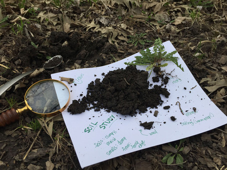 Go Ahead and Get Dirty With Your Own Soil Study