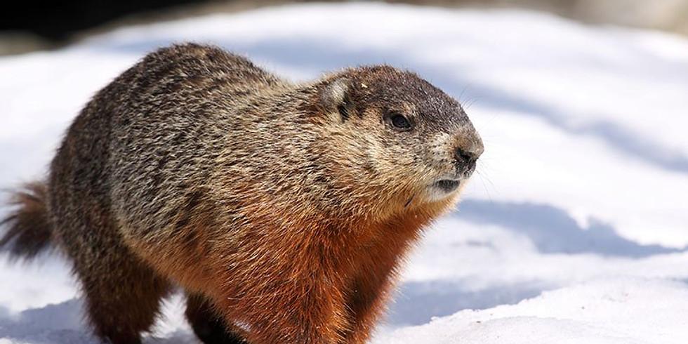 WonderKids: Groundhogs
