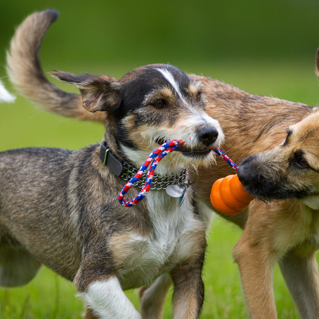 Myth Buster: Dogs' Mouths Aren't Cleaner Than Ours