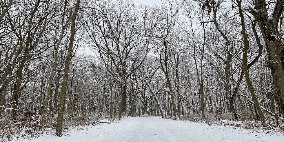 December in the Woods: Off-trail Adventure — Nature's Gifts