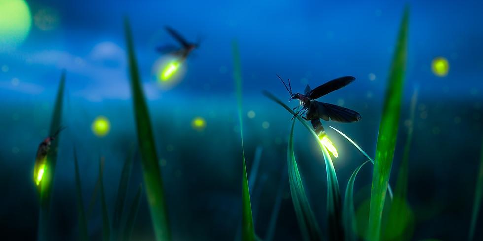 Firefly Hike