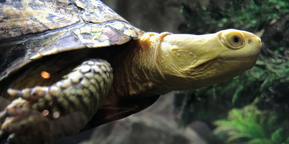 Sensory-Friendly Day: Animal Discovery