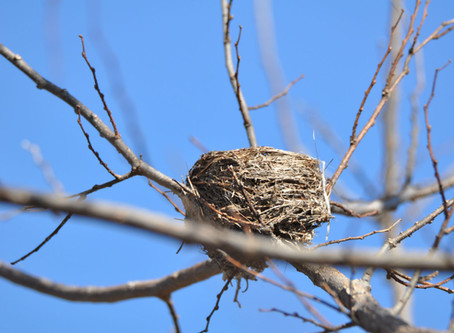 Head Outside For a Winter Nest Quest