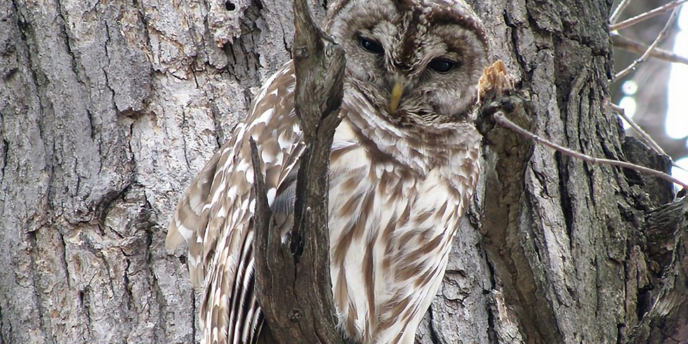 Owl Hike for Families