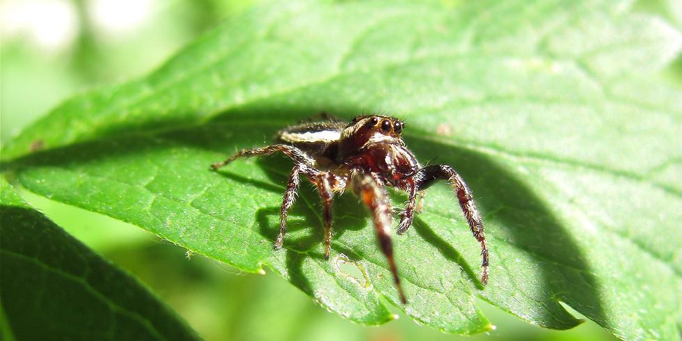 Spider Hike