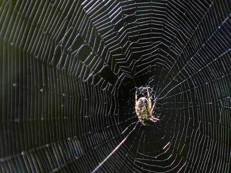 The Wide World of Spider Webs