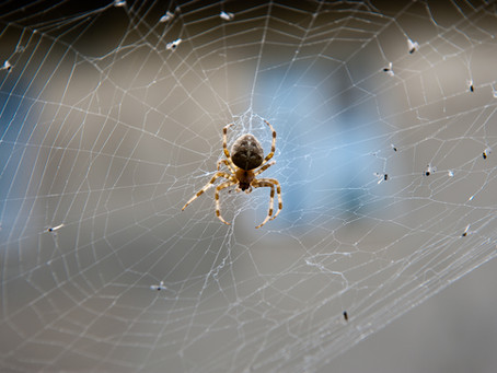 Rest Easy: You Don't Swallow Spiders While Sleeping