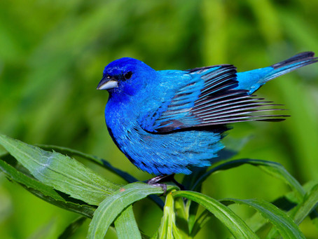 Why Do Birds Fly Into Windows?