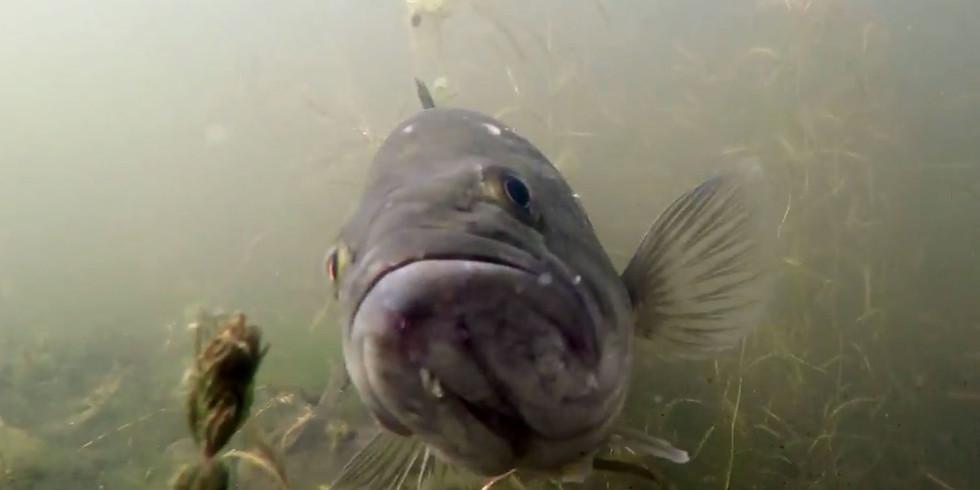 WonderKids: Fish