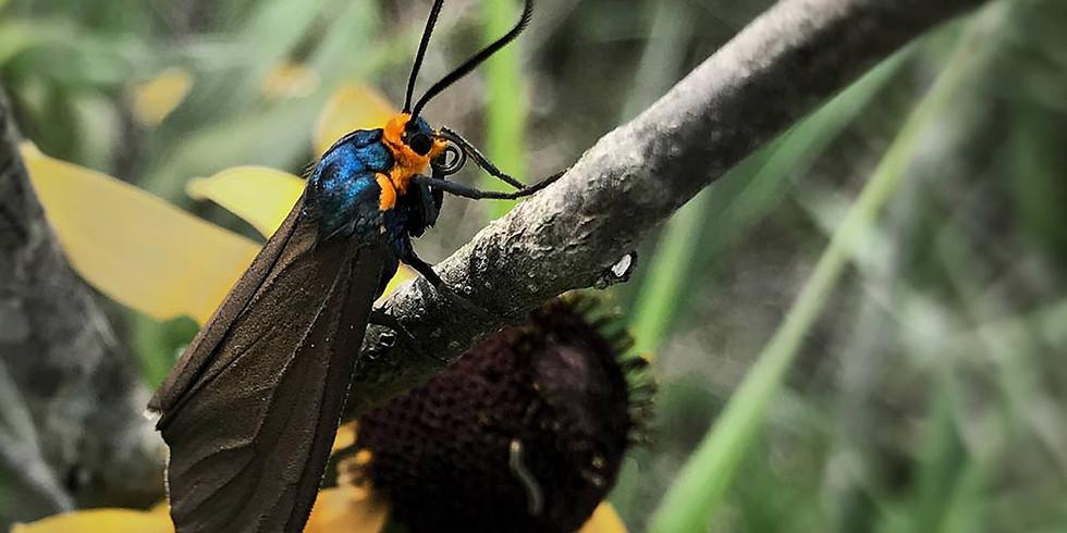 Moth Mania!
