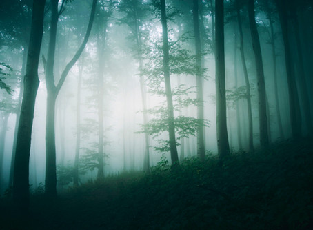 Where Does Fog Come From?