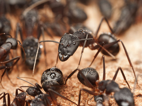 When Ants Go Marching, They Have Work To Do