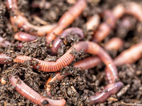Everything Earthworm