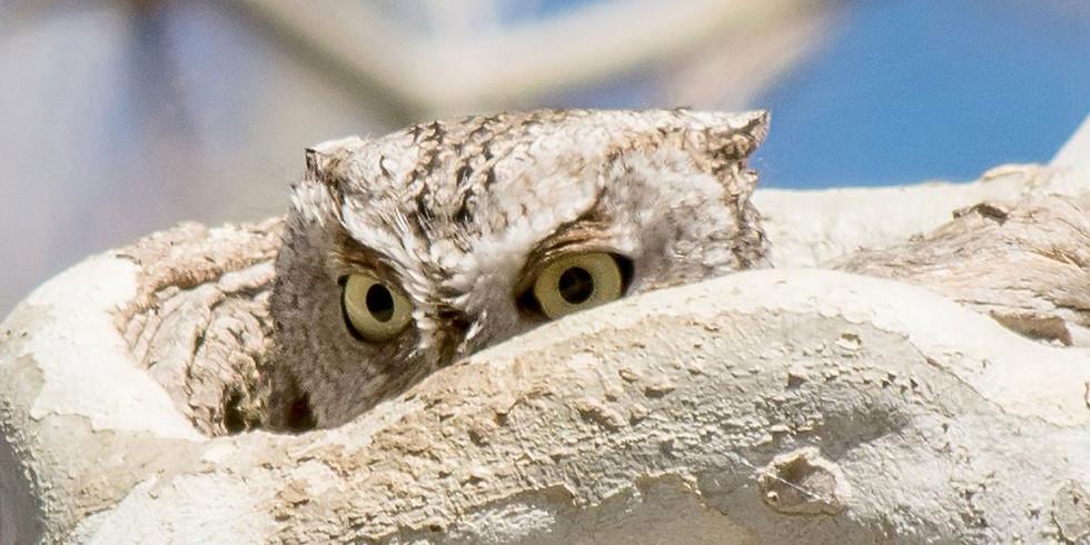 Holiday Owl Hike
