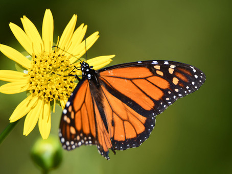 Illinois' State Symbols Include Wildlife We Love