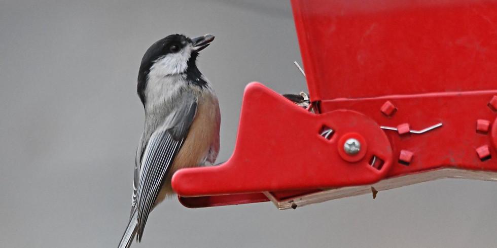 WonderKids: Winter Birds