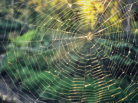 It's Spider Season, So Keep An Eye Out For Intricate Webs