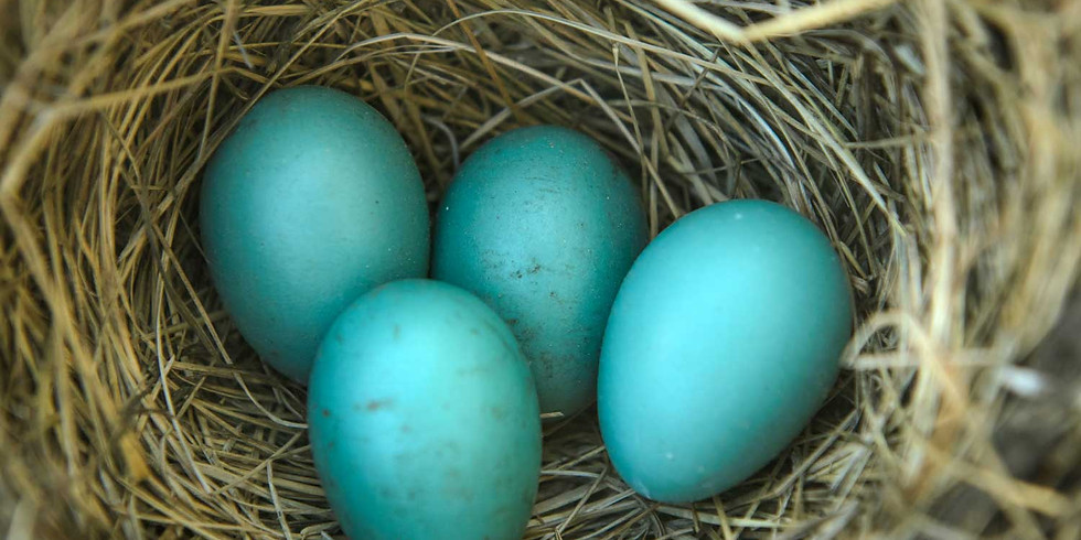 Little Explorers: Eggs