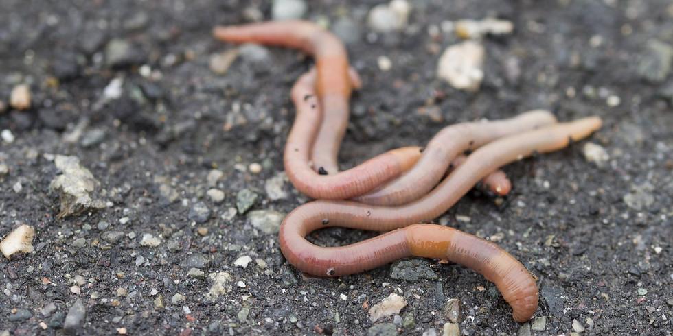 WonderKids: Worms