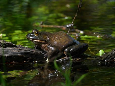 No, Touching A Frog Won't Give You Warts