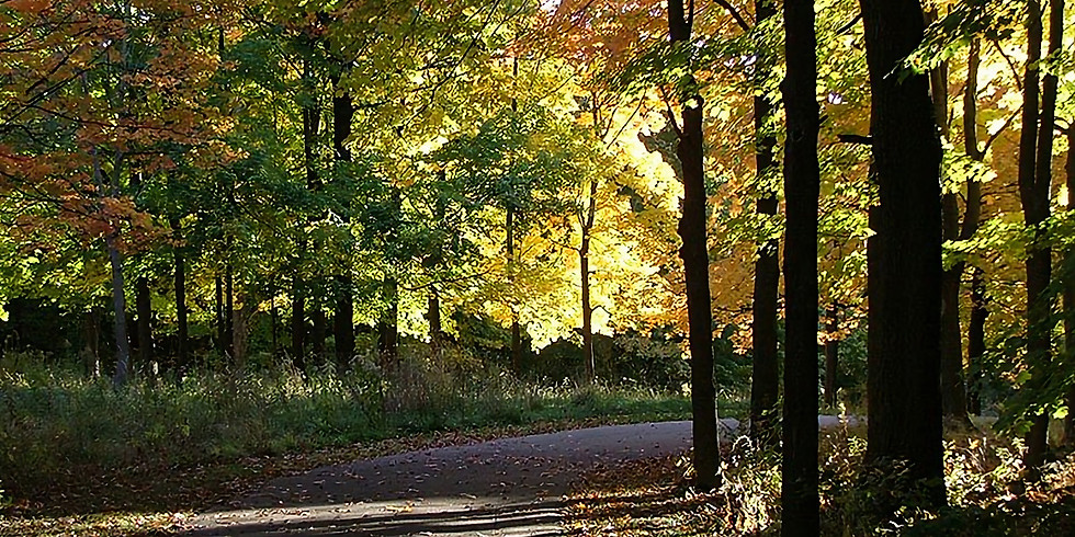Fall Color Walk for Kids