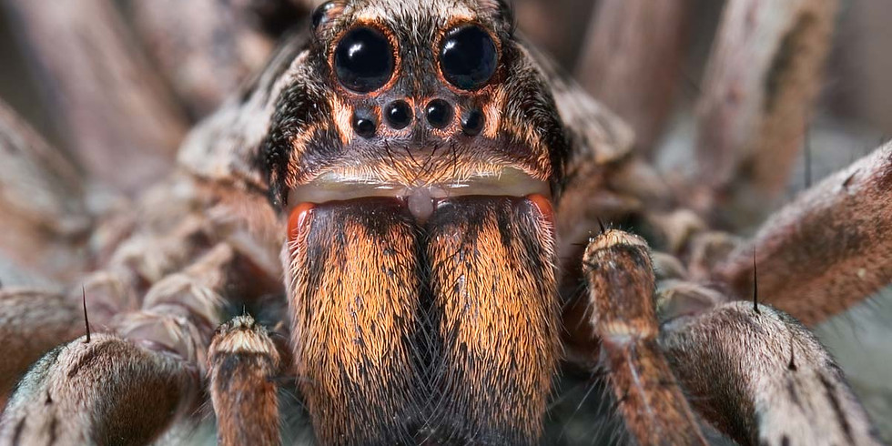 Spider Eyeshine Hike