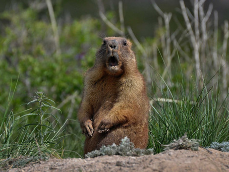 It's Their Moment To Shine: 5 Things About Groundhogs