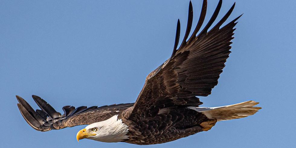 Migratory Bird Hike