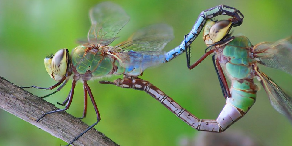 Insects Abound for Kids