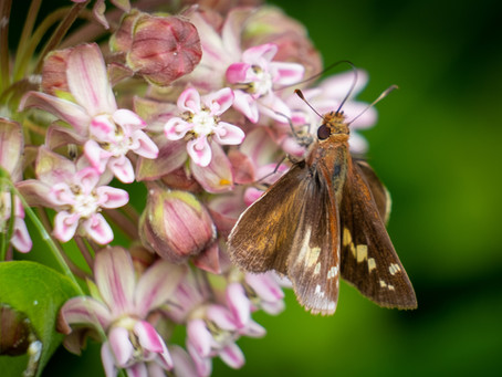 Skip Through Summer With Our Local Skippers