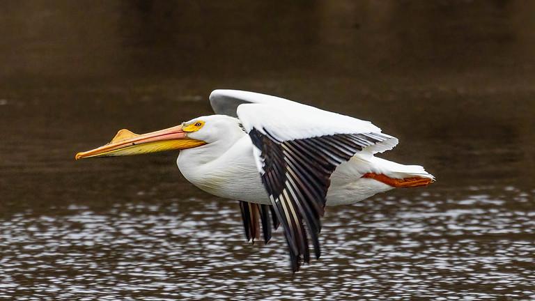 Sensory-Friendly Playdate: Big Birds