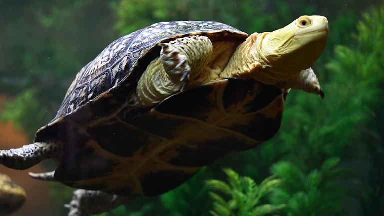 WonderKids: Turtles