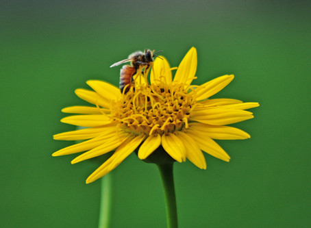 What's The Difference: Is That A Bee Or A Wasp?