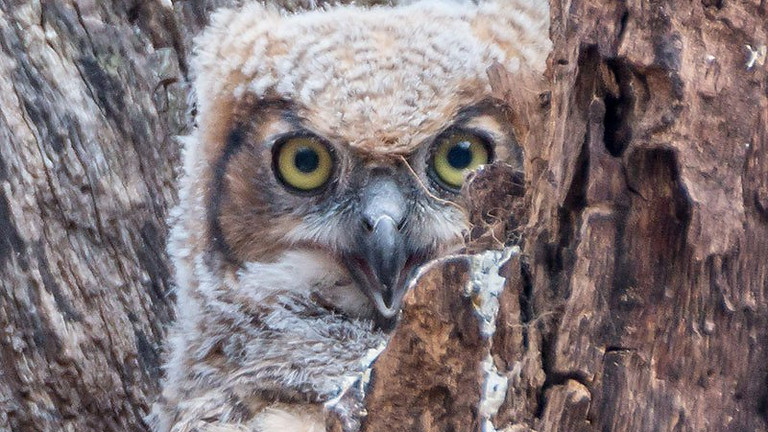 Holiday Owl Prowl