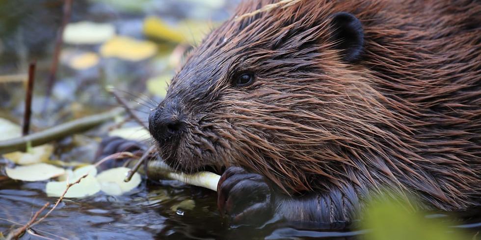 Lodge Living: Busy Beavers!
