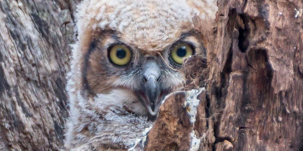 WonderKids: Owls